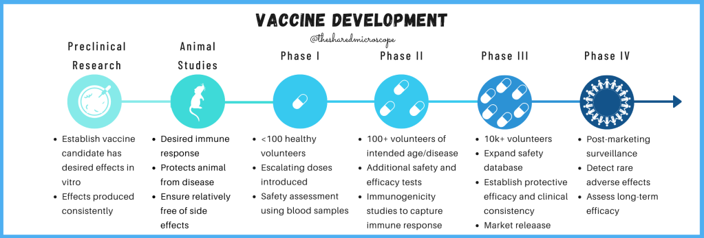 An image to explain vaccine development process. Begins with preclinical research, then animal studies, then Phase 1, 2 and 3, and finally phase 4 which is market surveillance.